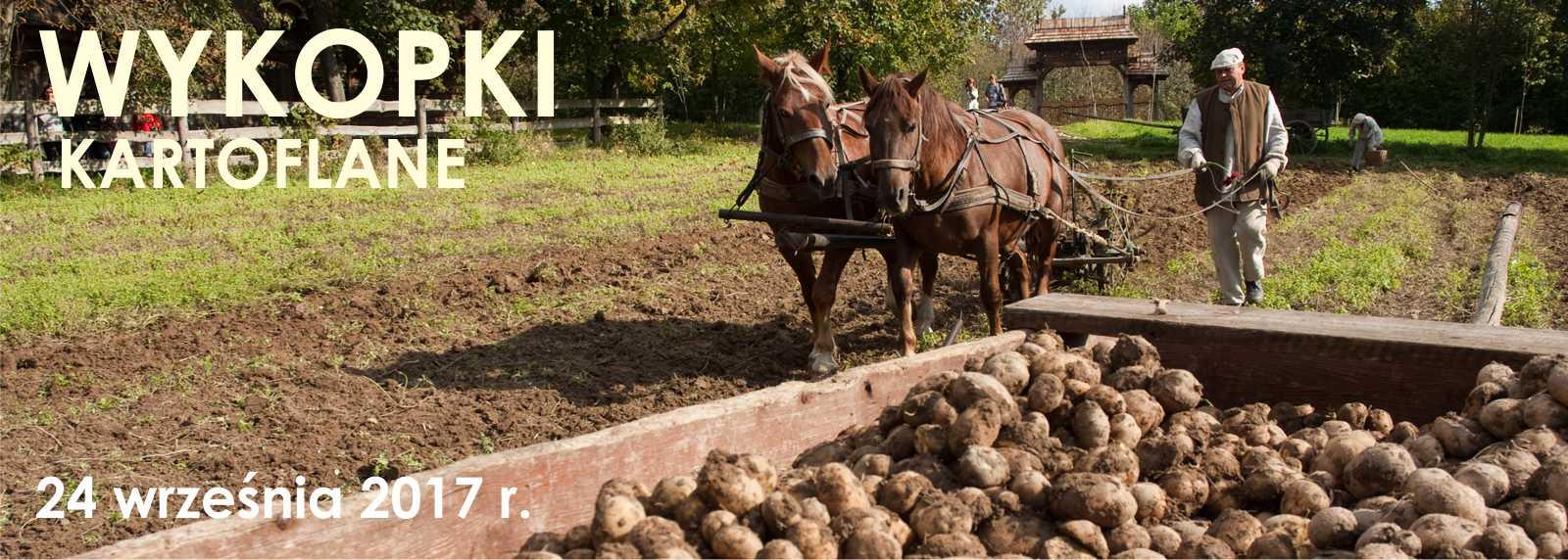 Wykopki kartoflane